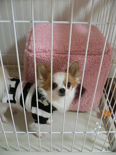 これで寝るのですか?