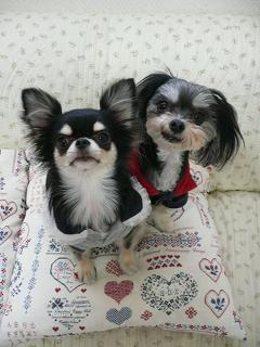 ヴィヴィ&ララ