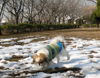 雪がわずかに