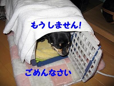 IMG_0012_1_1.jpg