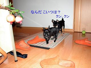 Img2005-05-25_0003.jpg