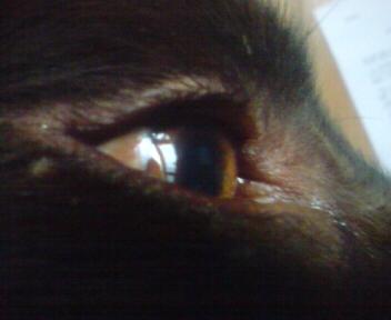 トロロンなジェーンの目