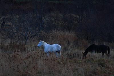 horse602