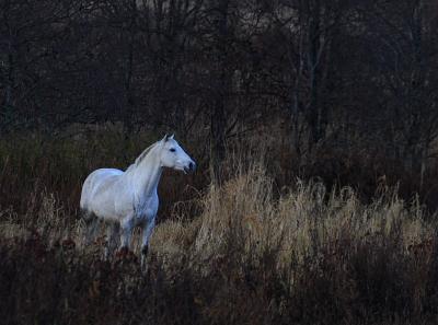 horse603