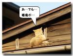ネコ(3)