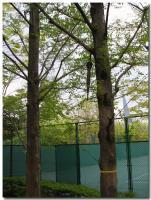 傘のなる木
