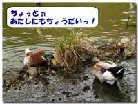 カモのお食事-3-