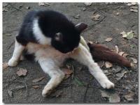猫背-1-