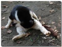 猫背-2-