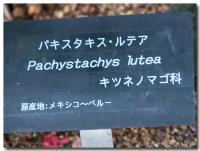パキスタキス・ルチア-2-