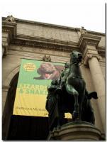 アメリカ自然史博物館-2-