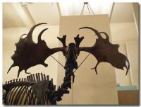 アメリカ自然史博物館-7-