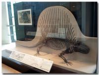 アメリカ自然史博物館-8-