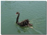 黒鳥-3-