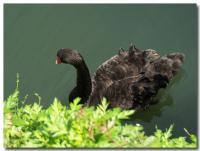 黒鳥-6-