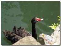黒鳥-7-