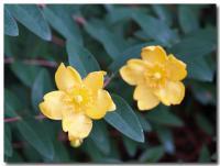 黄色い花-4-
