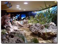 サンゴの海-1-