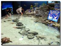 サンゴの海-2-