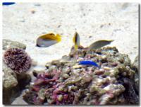 サンゴの海-3-