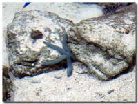 サンゴの海-5-