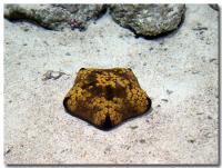 サンゴの海-6-