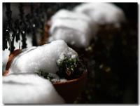 雪に耐える