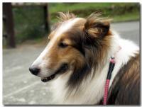 レンタル犬-2-