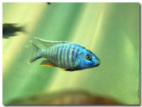 熱帯魚-1-