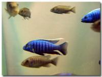 熱帯魚-2-