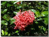 南国の花-1-