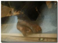 チンパンジーの足-2-