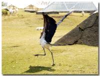 怪鳥ダンス-2-