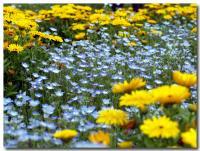 青い花 黄色い花-1-