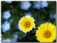 青い花 黄色い花-2-