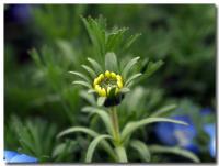 黄色い花-1-