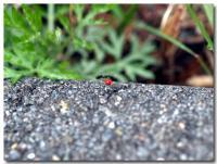 峠の虫たち-3-