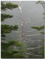 立ち枯れの木-1-