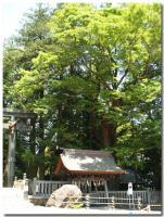 諏訪大社本宮-4-