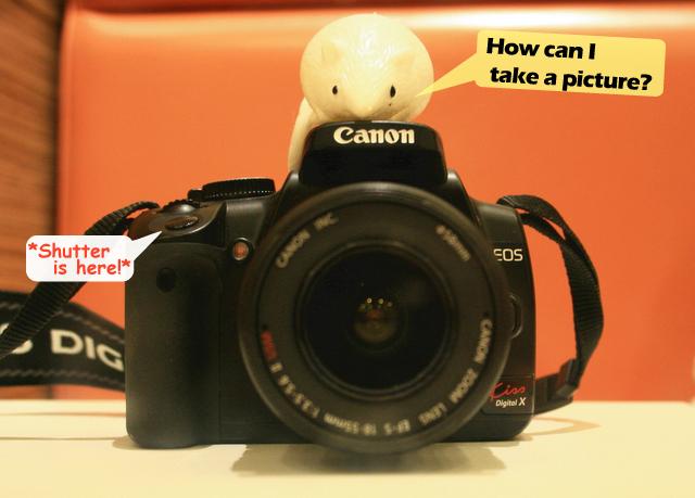 作品 写真集 ねずみ カメラ