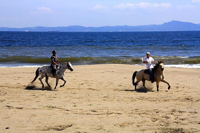 馬と海表紙