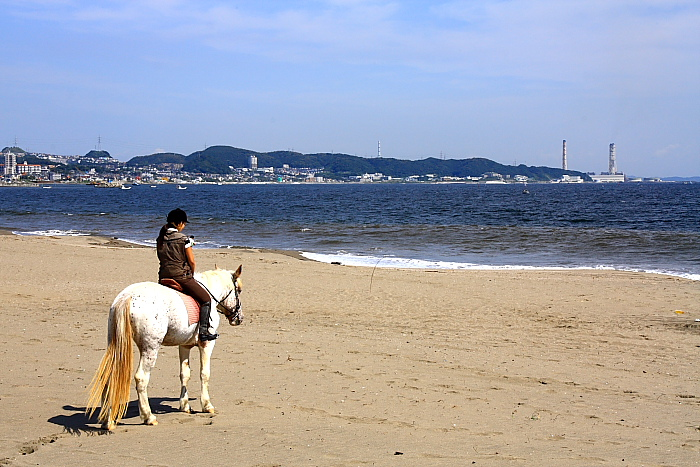 馬と海10