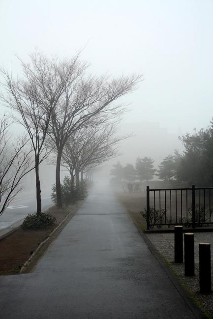 霧と街路樹