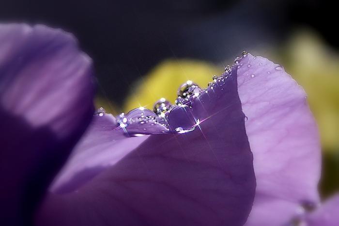 水玉宝石C