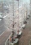 snow3-1.jpg