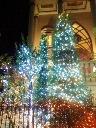 tree2-2.jpg