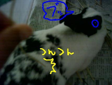 20060820113134.jpg