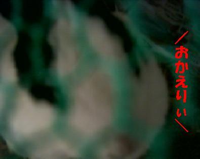 20060822184629.jpg