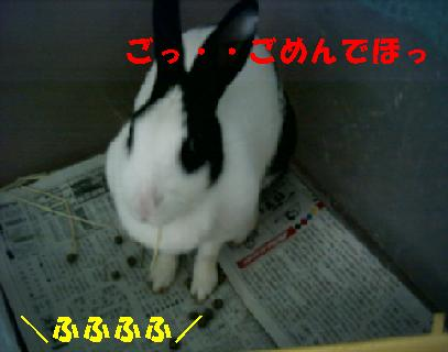 20060823105909.jpg