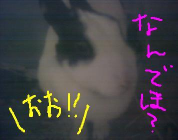 knb.jpg